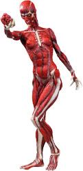 Фигурка Hellraiser Series 2 - Skinless Julia